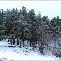 Первый снег :: Катерина Пестовская