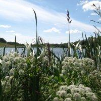 На берегу озера :: Alena Cyargeenka
