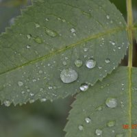 после дождичка... :: Юля Кривоносова