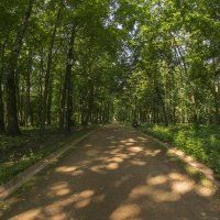 Прогулка в лесу :: Алексей Соминский