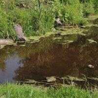 темно-зеленое болото :: Альбина Еликова