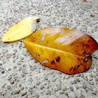 Осенний листик :: Arman S