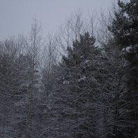 Просто лес :: SDA Самсонов
