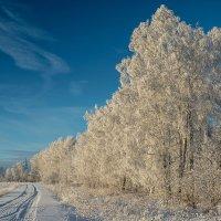 зима :: Илья Макаров