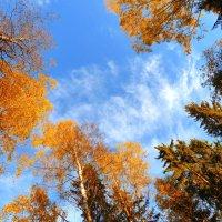 Голубое небо осени :: Анастасия Белякова