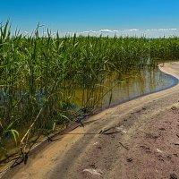 Линия берега :: Владимир Самсонов