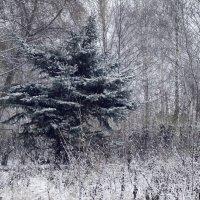 Зимний пейзаж :: Денис Спахов