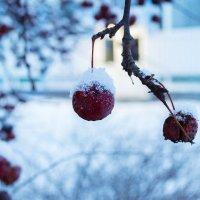 Зимнее яблоко :: Ksenia Crocker
