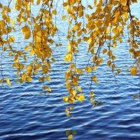 Золото на синем :: Андрей Ягодко