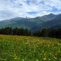 Поляна на высоте 2000м. :: Malkhaz Gelashvili