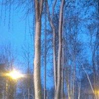 Зимняя аллея :: Мария Т
