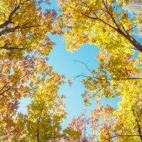 Золотая осень :: Елена Ладанюк