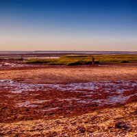 Сбор моллюсок на побережье Атлантики :: Яков Геллер
