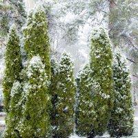 Первый снег :: Josef Kaston