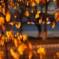 The Magic Of Autumn... :: Светлана М