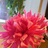 Коралловый цветок :: Ксения Рыскунова