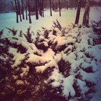 покрыты снегом аллеи.... :: Svetlana Makarenko