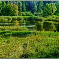 Озеро в лесу. :: Александр Лейкум