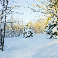 зимний пейзаж :: Elena Zhivoderova