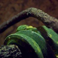 Змея :: Никита Пелевин