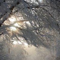 легкий туман :: Александр Белянин