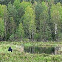 Время, проведенное на рыбалке... :: Ирина Романова