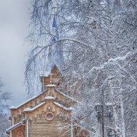 violet :: Андрей Маслов