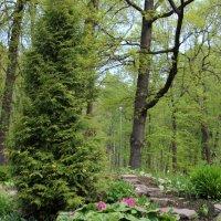 Весна на Елагином :: Светлана Дмитриева