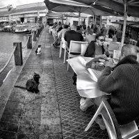 Попрошайки... (Beggars...) :: Roman Mordashev