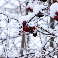 Зима-красна :: Владимир Буравкин