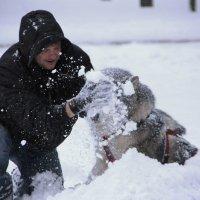 Счастливый пес :: Екатерина Ртищева
