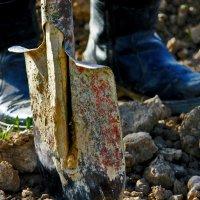 boots :: Titania Q