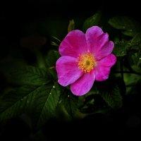 аленький цветочек :: gribushko грибушко Николай