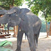 Веселый слон :: Светлана Белоусова