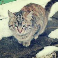 кошка... :: Christin`e Aghababyan