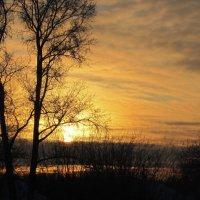 дерево на фоне заката :: Александр Преображенский