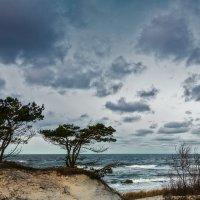 Сосны в дюнах :: Владимир Самсонов