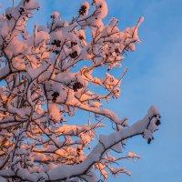 Утром...пришла Зима. :: Сергей Сердечный