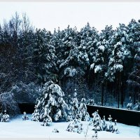 Зима в лесу. :: Александр Лейкум