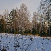 Зимний лес. :: Андрей В.