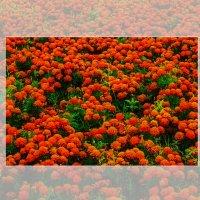 Газон с цветами. :: Александр Лейкум