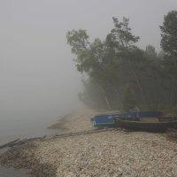 Лодки, туман :: Алексей Хвастунов