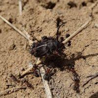 атака муравьев :: Геннадий Авденко
