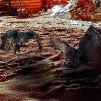 фрагмент валдайские зарисовки (охота на мышь) :: юрий макаров