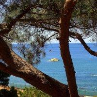 И сосенка хороша, и море лучше смотрится... :: ФотоЛюбка *