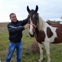 С наступающим Годом Лошади! :: Андрей Козлов