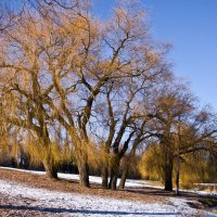 Зимний пейзаж :: Виктория Стремовская