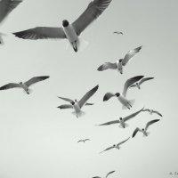 Птицы :: Arman S