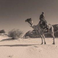 бедуин :: сергей агаев