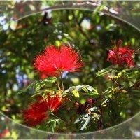 Цветы Калифорнии :: Яков Геллер